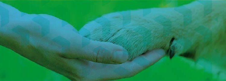 Habeas corpus para animais?